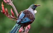 Bird Language