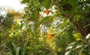 Food Forests Wildtending