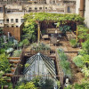 Urban Roof Top Garden