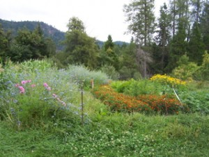 Whole Systems Seed – Breeding and Adaptation for Resiliency