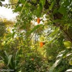 Wildtending: Permaculture in Zone 4