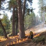 Healing with fire: using prescribed fire to restore cultural and ecological values in California