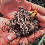 The Mycelial Metaphor