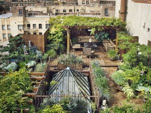 Urban Permaculture: From Toronto to Tel Aviv