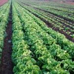 What is Adaptive Agriculture?