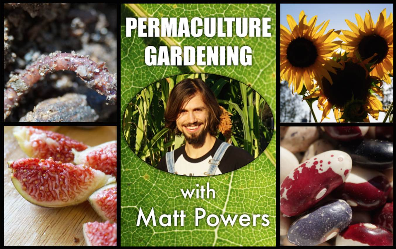 permaculture gardening matt powers