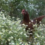 The Biodynamic Approach to Regenerative Agriculture