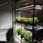 Solar & LEDs for New Closed Loop Agriculture