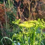 Read more about the article A Real Permaculture Garden