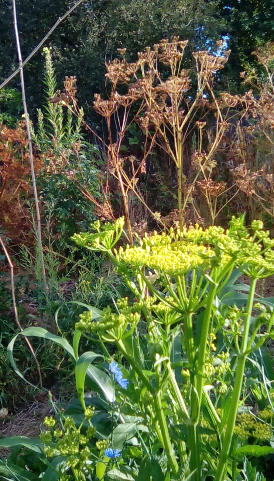A Real Permaculture Garden