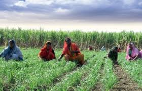 Organizing Indian Women in Permaculture Food Self Sufficiency Systems