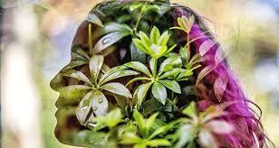 Herbal Intelligence