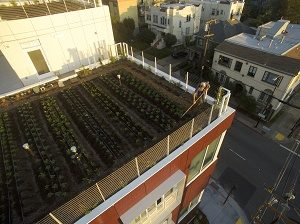 New Systems for Urban Agriculture