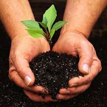 Urban Soils and Safe Food Growing