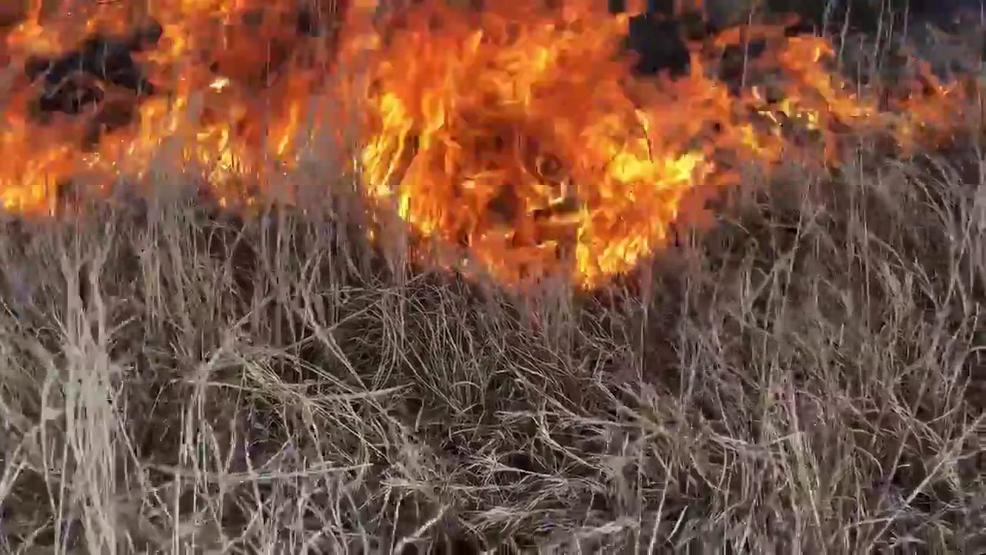 Ecology in Permaculture: Fire Ecology