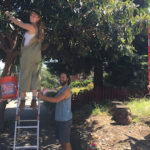 Foraging Adventures: Urban Solutions for an Ecological Economy