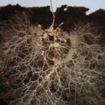 Sacred Anatomy Chi Gung and Plant Sensing